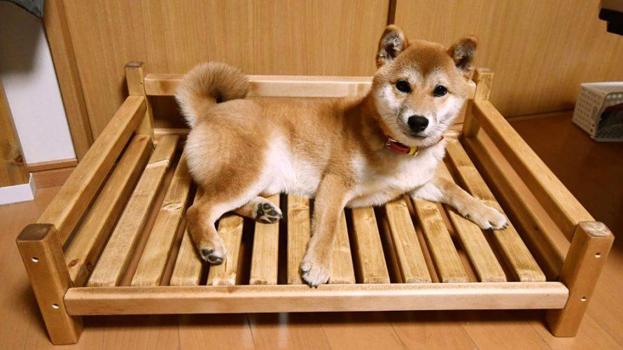 犬用ベッド?ソファ?(2)